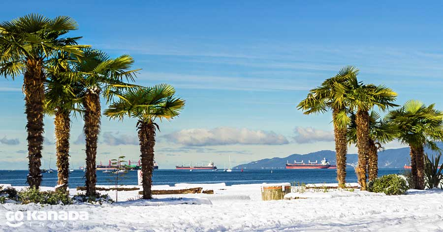 Palms in Snow English Bay Vancouver Canada