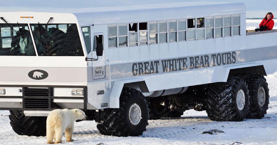 Great White Bear Tours Churchill Manitoba Kanada