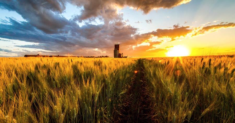 Saskatchewan sunset over wheat field, Canada