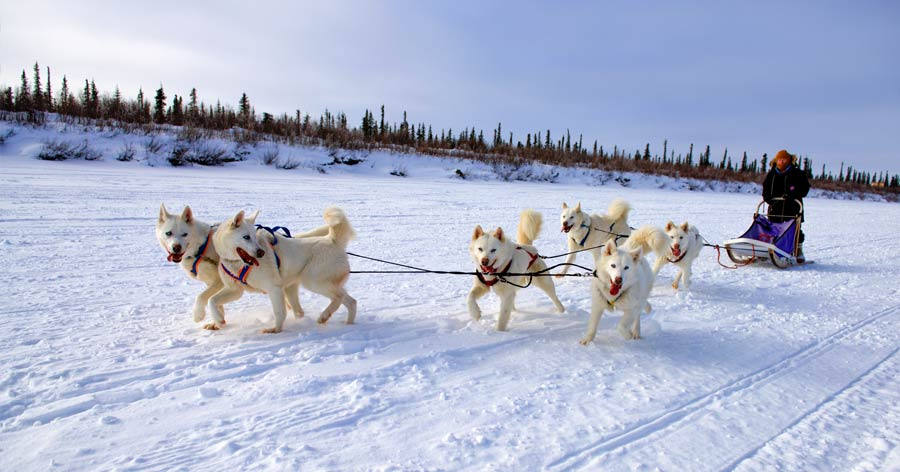 Dog Sled, Northwest TerritoriesNWT